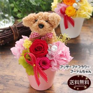 母の日 花 プレゼント ギフト プリザーブドフラワー トイプードルちゃんVerポムリ ケース入り 誕生日  送料無料|tsukaguchi