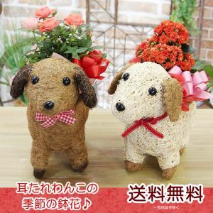 かわいいわんこのカゴに季節の鉢花♪ お花を可愛くお届けいたします!  【商品サイズ:目安】:画像に記...