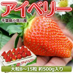いちご 千葉県産 「アイベリー」 8〜15粒 約500g ※冷蔵【同梱不可】○|tsukiji-ichiba2