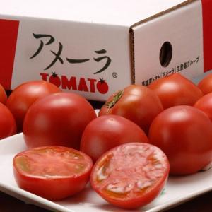 トマト とまと 『アメーラトマト』 静岡・長野産 3S〜2L 約900g(7〜23玉入)|tsukiji-ichiba2