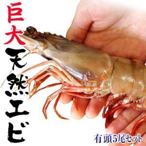 えび 海老 エビ 天然・有頭えび シータイガー 5尾 約500g 冷凍同梱可能|tsukiji-ichiba2