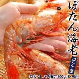 えび 海老 エビ ロシア産「ぼたん海老」 ボタンエビ 特大2Lサイズ メス限定 500g(8〜9尾)|tsukiji-ichiba2