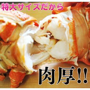 海老 えび エビ ロブスター 南アフリカ産 訳あり 特大ボイルロブスター 600g以上 冷凍 同梱可能|tsukiji-ichiba2|04