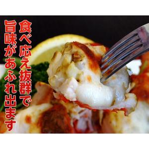 海老 えび エビ ロブスター 南アフリカ産 訳あり 特大ボイルロブスター 600g以上 冷凍 同梱可能|tsukiji-ichiba2|05