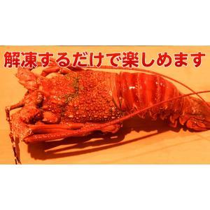 海老 えび エビ ロブスター 南アフリカ産 訳あり 特大ボイルロブスター 600g以上 冷凍 同梱可能|tsukiji-ichiba2|06