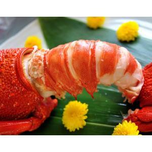 海老 えび エビ ロブスター 南アフリカ産 訳あり 特大ボイルロブスター 600g以上 冷凍 同梱可能|tsukiji-ichiba2|08