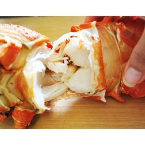 海老 えび エビ ロブスター 南アフリカ産 訳あり 特大ボイルロブスター 600g以上 冷凍 同梱可能|tsukiji-ichiba2|10
