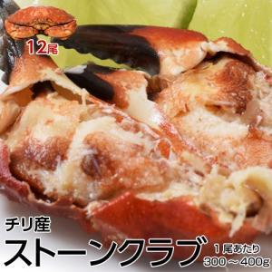かに カニ 送料無料 ストーンクラブ 大容量12尾 [3尾入り×4袋セット] 冷凍 冷凍同梱可能|tsukiji-ichiba2