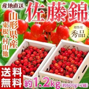 送料無料 山形産 さくらんぼ佐藤錦 Mサイズ 約1.2kg(...