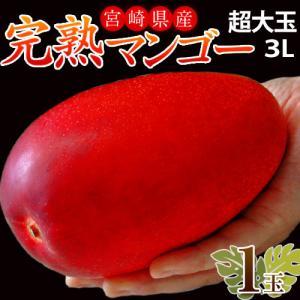 マンゴー 宮崎県産 超大玉 マンゴー 3L ×1玉(450〜509g) 送料無料|tsukiji-ichiba2