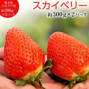 いちご 栃木県産 「スカイベリー」 1箱 約600g <約300g(5〜15粒)×2パック> ※冷蔵|tsukiji-ichiba2