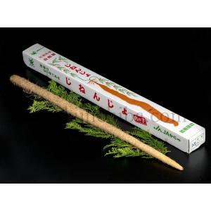 「自然薯」 佐賀・茨城・山形産他 1本 約700g ○ tsukiji-ichiba2