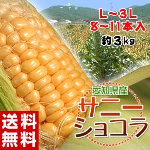 とうもろこし 愛知県産 トウモロコシ サニーショコラ 8〜11本入 L〜3Lサイズ 約3kg 冷蔵 産地直送 送料無料|tsukiji-ichiba2