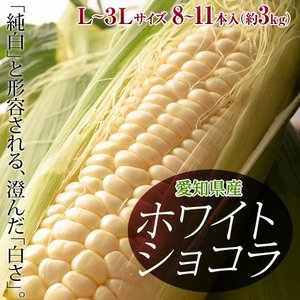 とうもろこし 愛知県産 トウモロコシ ホワイトショコラ 8〜11本入 L〜3Lサイズ 約3kg 冷蔵 産地直送 送料無料|tsukiji-ichiba2