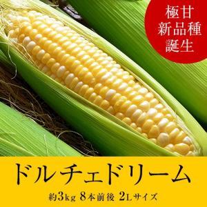 送料無料 『ドルチェドリーム とうもろこし』 北海道産 約3kg 8本前後 ※冷蔵|tsukiji-ichiba2