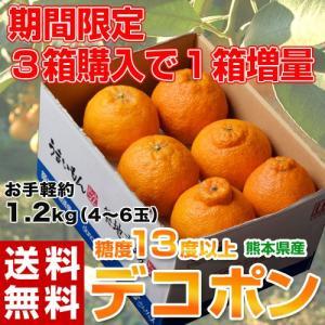 送料無料 熊本県産 デコポン 約1.2kg(4〜6玉)【3箱買えば1箱オマケ】 tsukiji-ichiba2