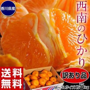 みかん 柑橘 訳あり品 新品種 香川県産 「西南のひかり」 約5kg ※サイズ未指定(2S〜3L) 送料無料|tsukiji-ichiba2