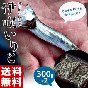 いりこ 送料無料 香川県産 大羽いりこ 300g×2 だし 出汁 無添加 煮干し 国産 常温 同梱不可|tsukiji-ichiba2
