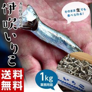 いりこ 送料無料 香川県産 大羽いりこ 大容量 1キロ 業務用 だし 出汁 無添加 煮干し 国産 常温 同梱不可|tsukiji-ichiba2