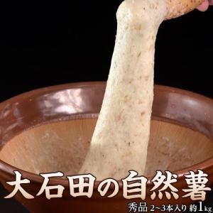 お中元 夏 ギフト とろろ 自然薯 じねんじょ 山形県産大石田 雪下 秀品 1キロ(2〜3本入り) 産地直送 冷蔵 同梱不可|tsukiji-ichiba2