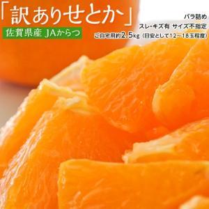 みかん 柑橘 佐賀県産 訳あり せとか 約2.5kg(訳あり品 スレ・傷あり) 送料無料|tsukiji-ichiba2