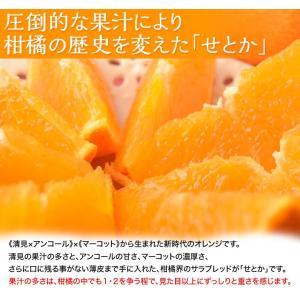 みかん 柑橘 佐賀県産 訳あり せとか 約2.5kg(訳あり品 スレ・傷あり) 送料無料|tsukiji-ichiba2|03