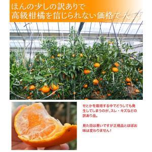 みかん 柑橘 佐賀県産 訳あり せとか 約2.5kg(訳あり品 スレ・傷あり) 送料無料|tsukiji-ichiba2|04