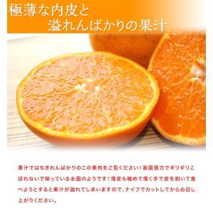 みかん 柑橘 佐賀県産 訳あり せとか 約2.5kg(訳あり品 スレ・傷あり) 送料無料|tsukiji-ichiba2|05