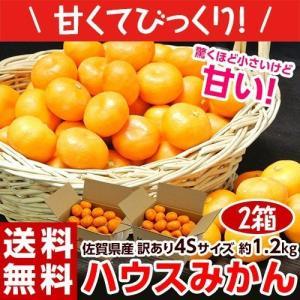 みかん JAからつ ハウスみかん 訳あり 超小玉 4S 約1.2キロ×2箱 合計2.4キロ 送料無料|tsukiji-ichiba2