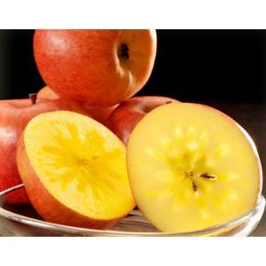 こみつ りんご リンゴ 究極の蜜入りりんご 青森県産 こみつ 6〜12玉 約2キロ ※4箱まで同一配送先に限り送料1口 tsukiji-ichiba2 16