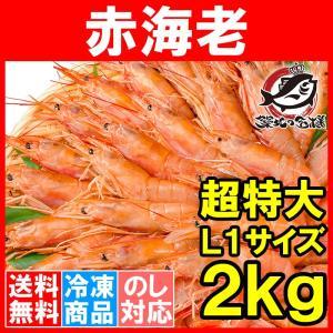 赤海老 赤えび 2kg 超特大 L1 20〜40尾 業務用 1箱 赤エビ あかえび アカエビ 寿司 刺身用|tsukiji-ousama