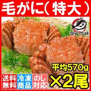 毛ガニ 毛がに 毛蟹 浜茹で 特大 毛ガニ姿 平均 570g ×2尾 合計 約1.1kg セット かに カニ 蟹 かに鍋 焼きガニ|tsukiji-ousama