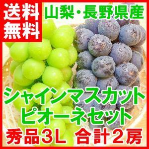 ピオーネ 650g前後 シャインマスカット 700g前後 セット 山梨県勝沼産産 1.3kg前後 合計2房 1箱 (ぶどう ブドウ 葡萄) tsukiji-ousama
