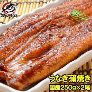 超特大 国産うなぎ蒲焼き 平均250g前後×2尾 タレ付き (国産 うなぎ ウナギ 鰻)|tsukiji-ousama