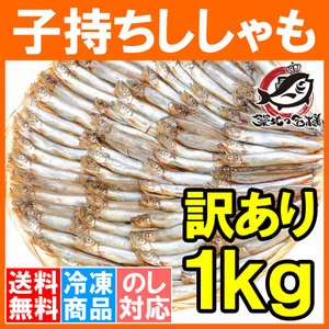 訳ありししゃも(1kg・業務用子持ちシシャモ)ししゃも シシャモ|tsukiji-ousama