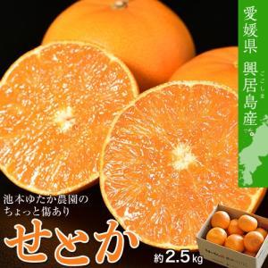 せとか 訳あり 愛媛県 ごご島産 ちょっと傷あり 池本ゆたか農園 小玉せとか 2S〜S 約2.5kg 送料無料|tsukijiichiba