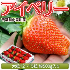 千葉県産「アイベリーいちご」12〜15粒 約500g ※冷蔵 frt ☆