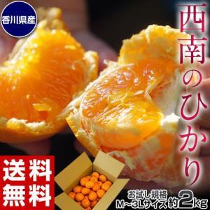 みかん 柑橘 香川県産 新品種のみかん 西南のひかり お試し 約2kg 秀〜優品 M〜3Lサイズ 送料無料 tsukijiichiba