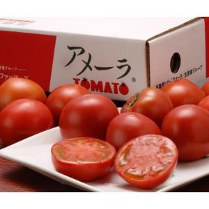 『アメーラトマト』 静岡・長野産 3S〜2L 約900g(7〜23玉入) ○|tsukijiichiba