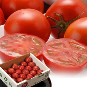 トマト フルーツトマト とまと スイートピュア 静岡産 3S〜2L 約900g(7〜23玉入)|tsukijiichiba