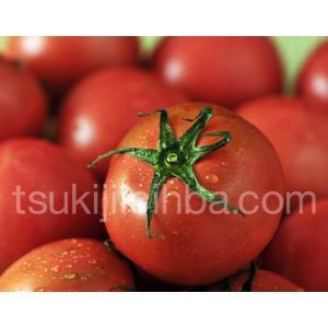 『夜須のフルーツトマト』 高知・夜須町産 約1.8kg(24〜42玉) ※常温 ☆|tsukijiichiba