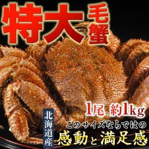かに カニ 蟹 ケガニ 毛ガニ 毛がに 北海道産 超特大「毛蟹」 堅蟹 1尾×約1kg 送料無料|tsukijiichiba