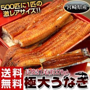《送料無料》宮崎県産 極大うなぎ 1尾約270g ※冷凍 sea ☆|tsukijiichiba