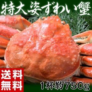 ≪送料無料≫カナダ産 特大姿ずわい蟹 約750g sea ☆