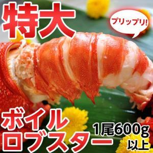 ≪送料無料≫南アフリカ産 訳あり特大ボイルロブスター 600g以上 ※冷凍 sea ☆|tsukijiichiba
