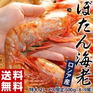 ロシア産 「ぼたん海老」 Lサイズ メス限定 500g(9尾前後) sea ☆|tsukijiichiba