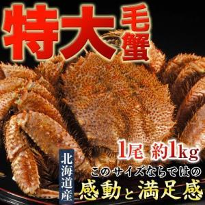 北海道産 超特大 毛蟹 ボイル済み・堅蟹 1尾 約1kg ※冷凍 送料無料 tsukijiichiba
