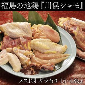 川俣シャモ バラシ1羽 メス(内臓付き・ガラ付き) 1.6キロ以上 福島県/ギフト/冷蔵|tsukijiichiba