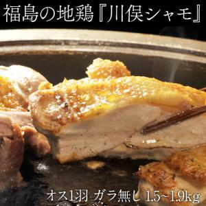 肉 鶏肉 地鶏 福島県 ギフト 川俣シャモ バラシ1羽 オス (内臓付き・ガラ無) 1.5kg以上 tsukijiichiba