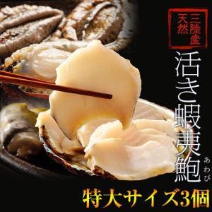 《送料無料》活・蝦夷アワビ(天然)計3個 Lサイズ(1個:220〜240g) ※冷蔵 sea ○ tsukijiichiba